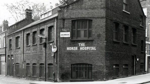 HorseHospital